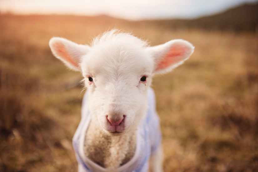 adorable animal animal photography animal portrait
